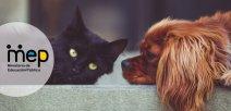 perro y gato acostados.